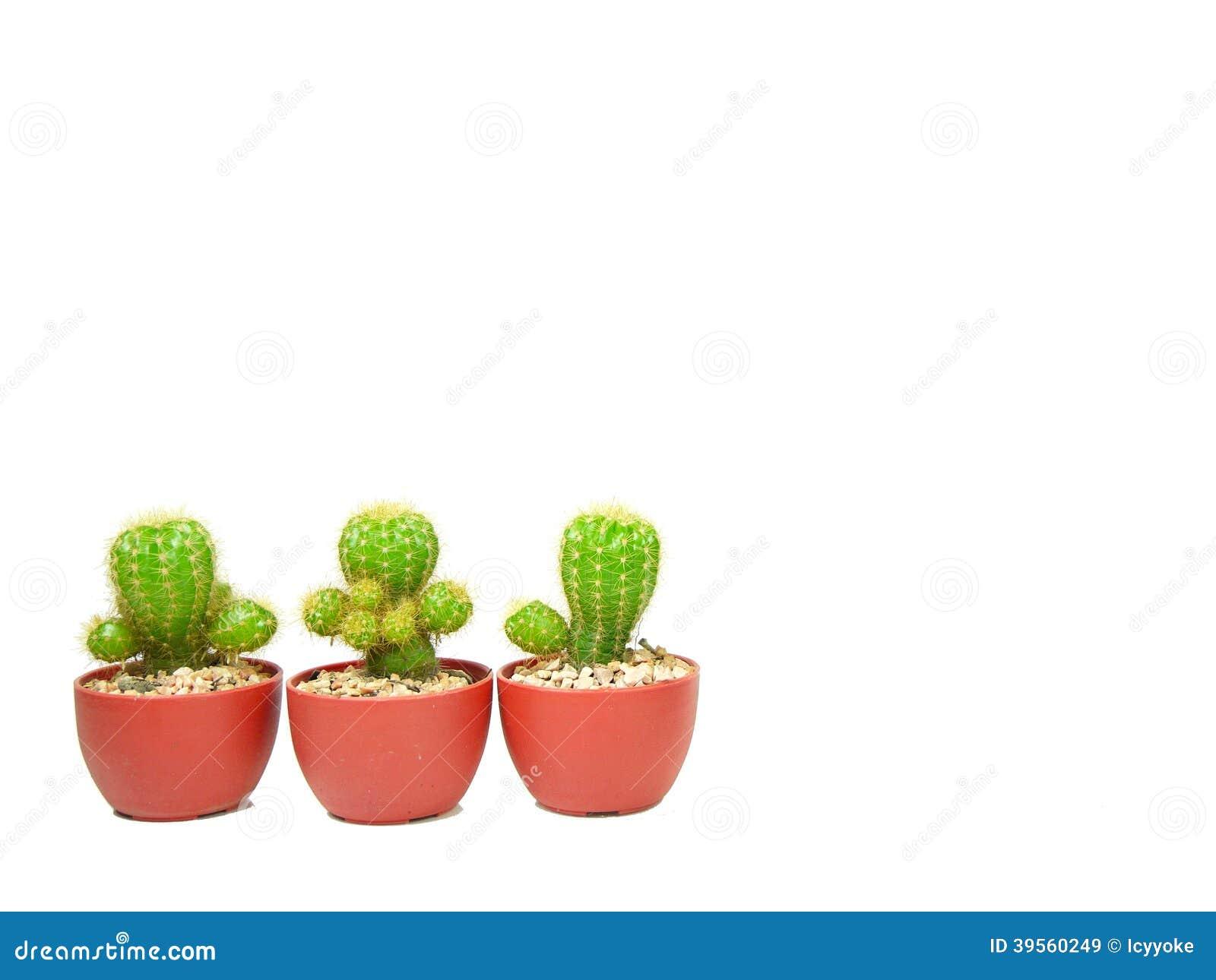 Tre kaktuskrukor