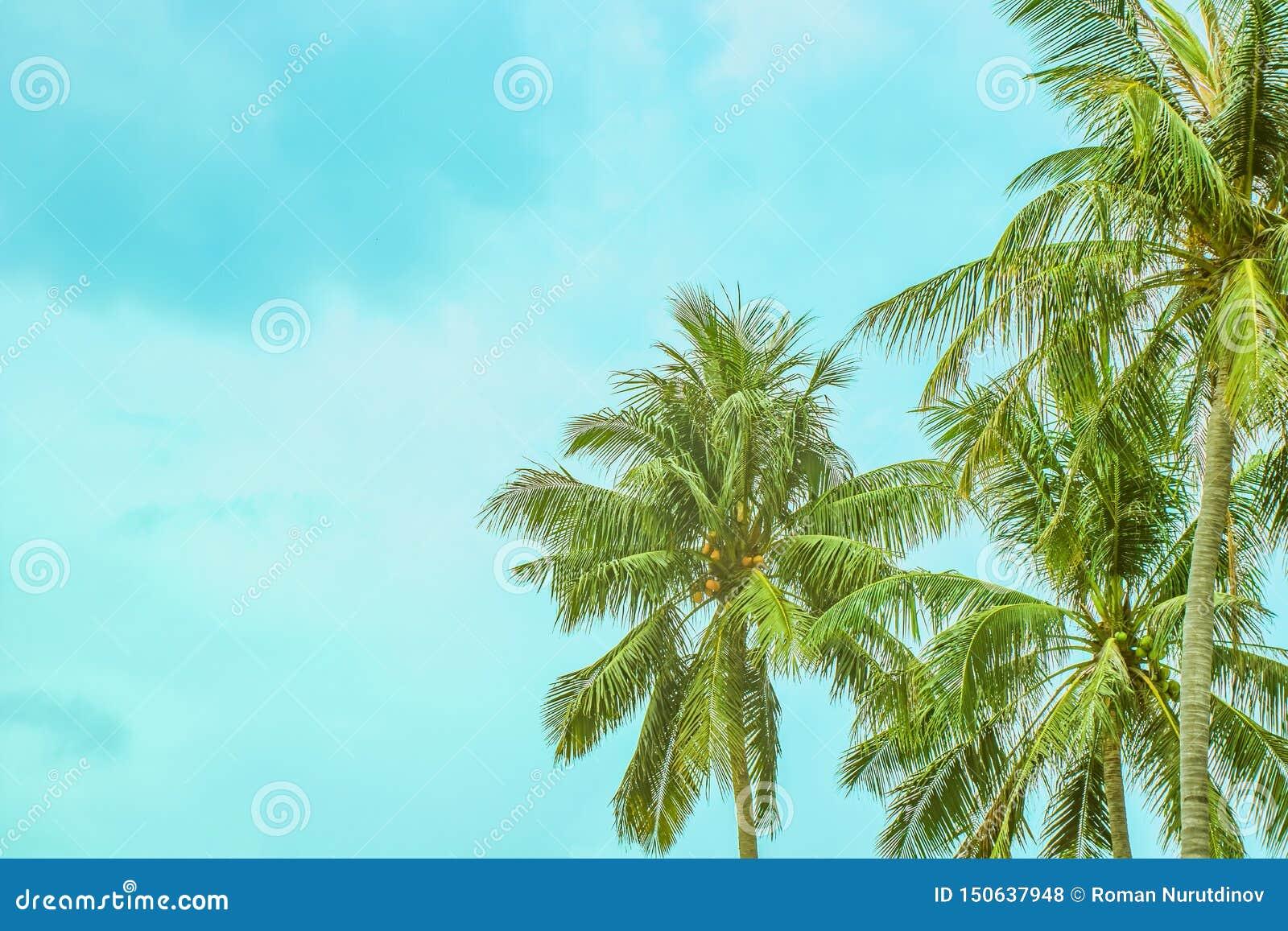 Tre palmträd mot en molnig himmel