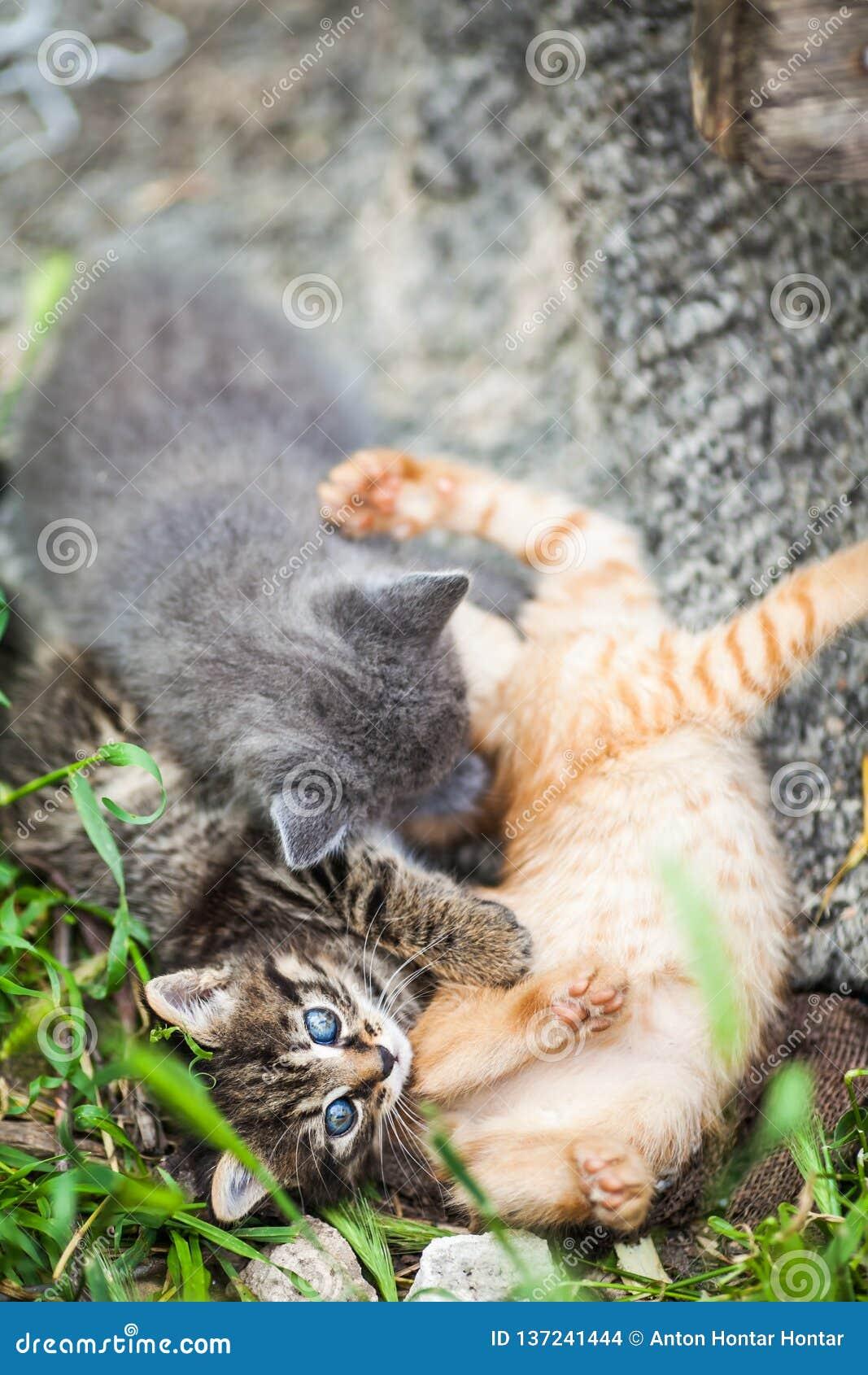 Tre piccoli gattini che giocano in un erba