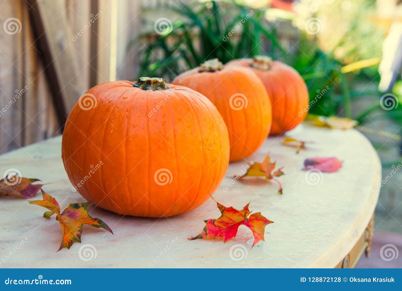 Tre pumpor med nedgångsidor på stentabellen med gaarden säsongsbetonad bakgrund Höstskörd, tacksägelse, halloween begrepp