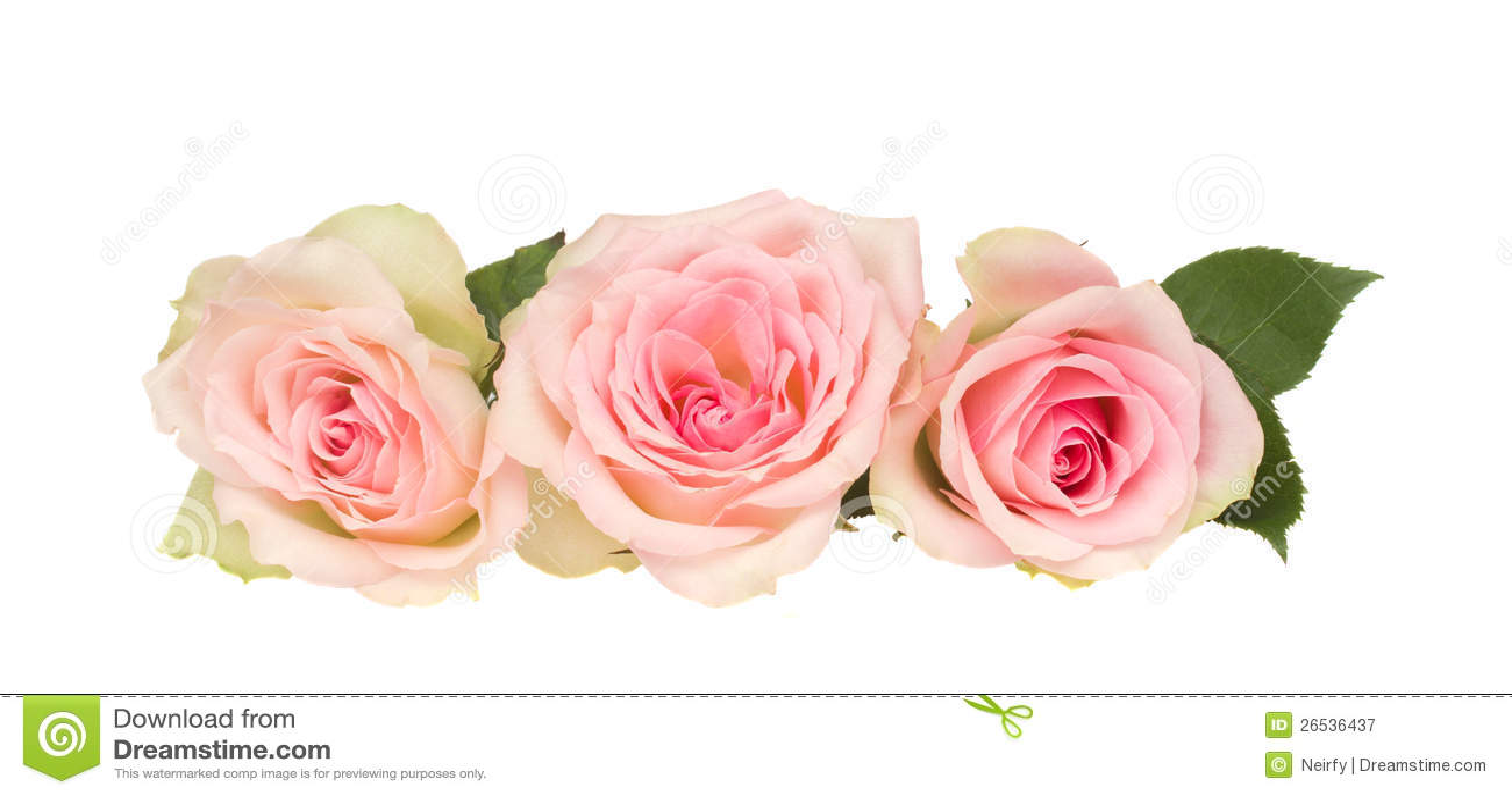 Tre rosa ro