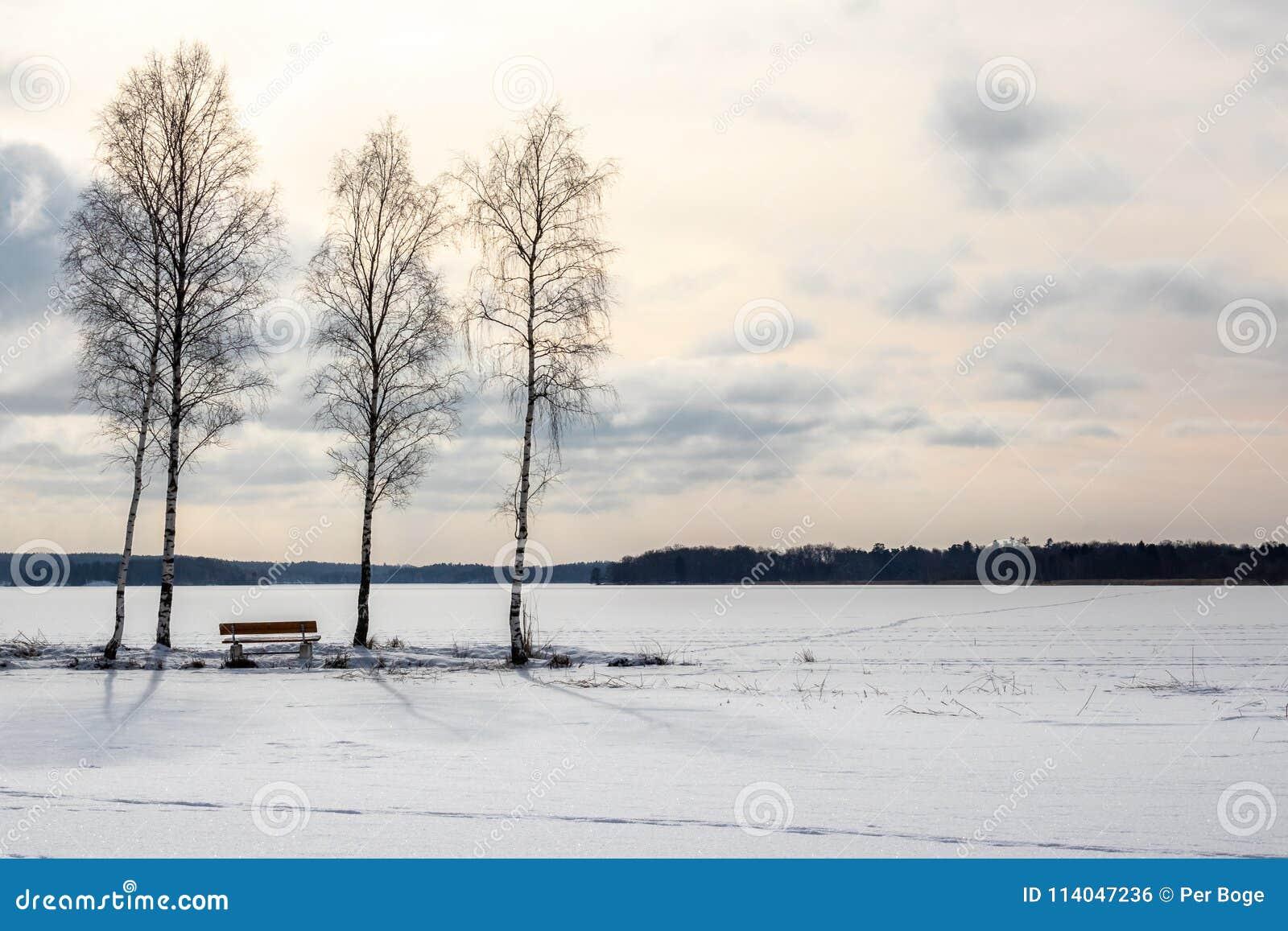 Tre träd och en bech, härlig fryst sjölandskap för eftermiddag sen vinter