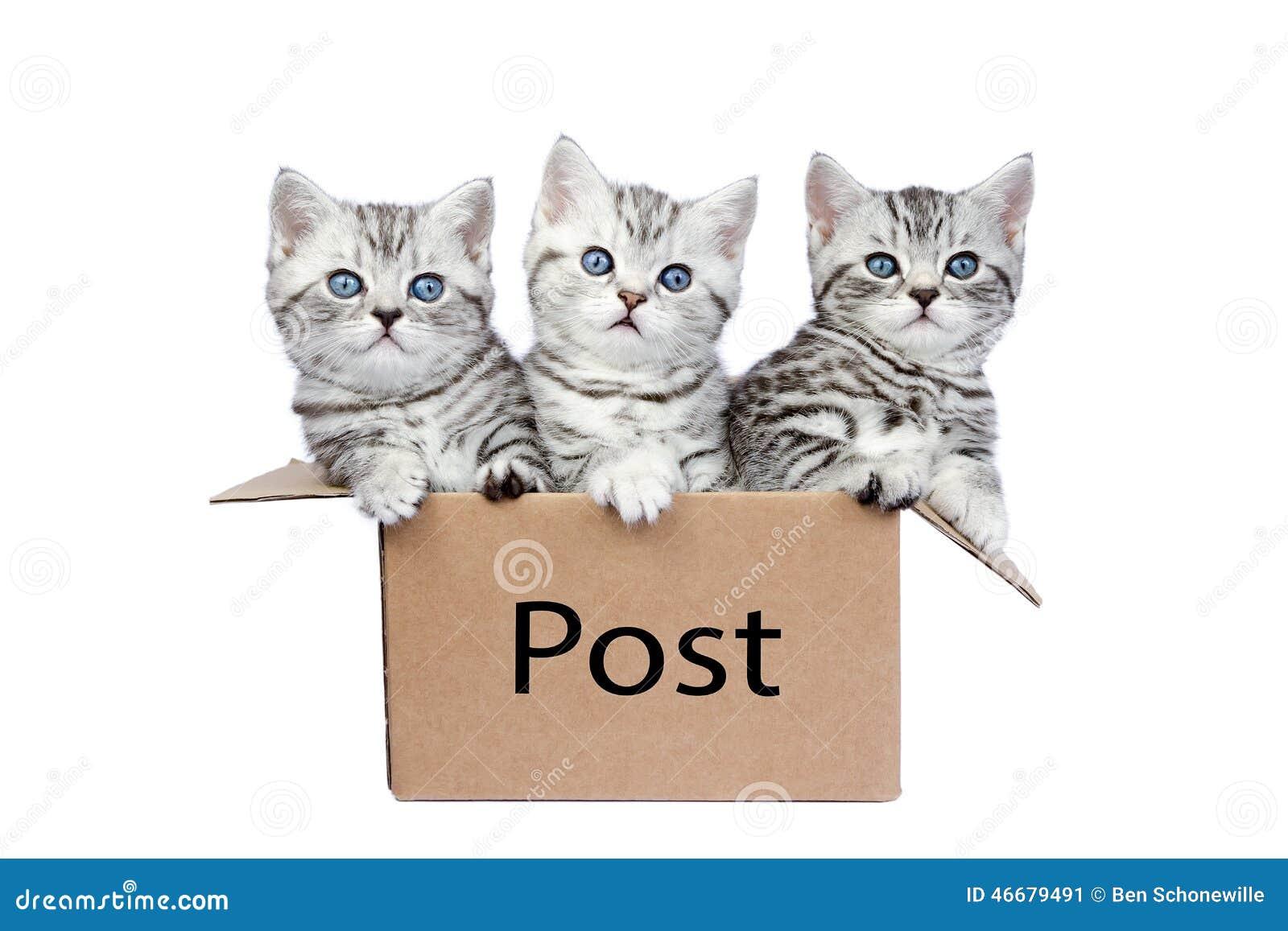 Tre unga katter i kartong med ordstolpen