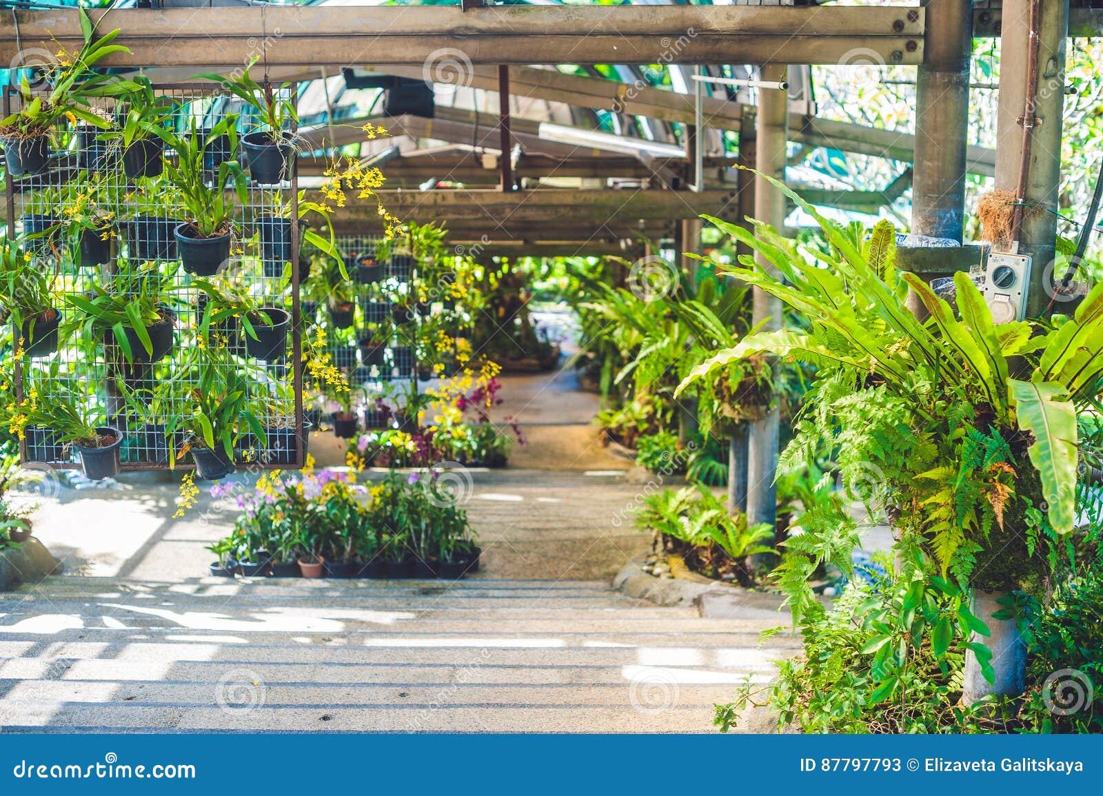 Botanische Tuin Leiden : Treden in een botanische tuin die tot het terras leiden stock
