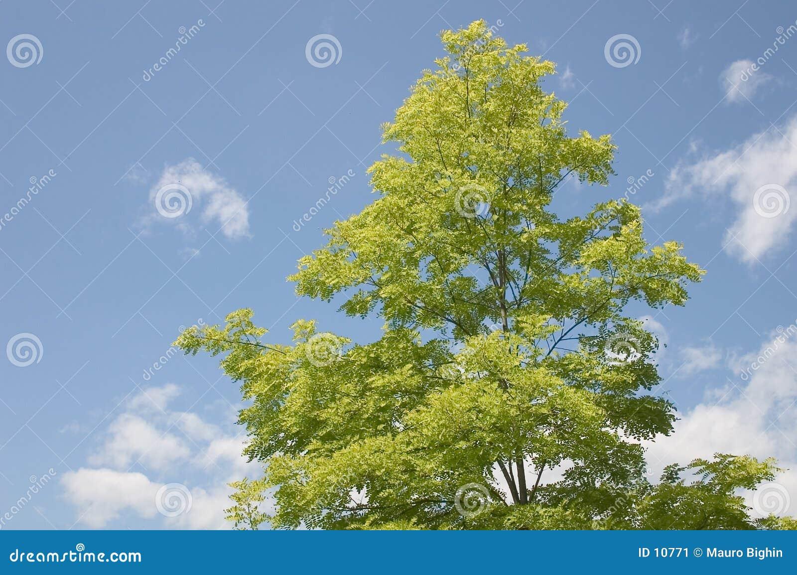 Download Tree stock image. Image of hush, imperturbation, impassivity - 10771