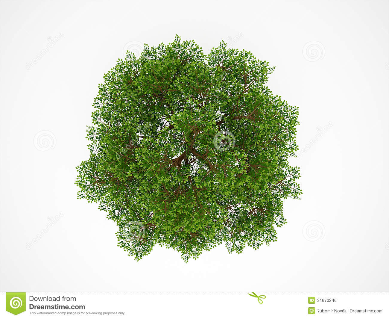 Tree From Above Isolated Royalty Free Stock Image - Image: 31670246