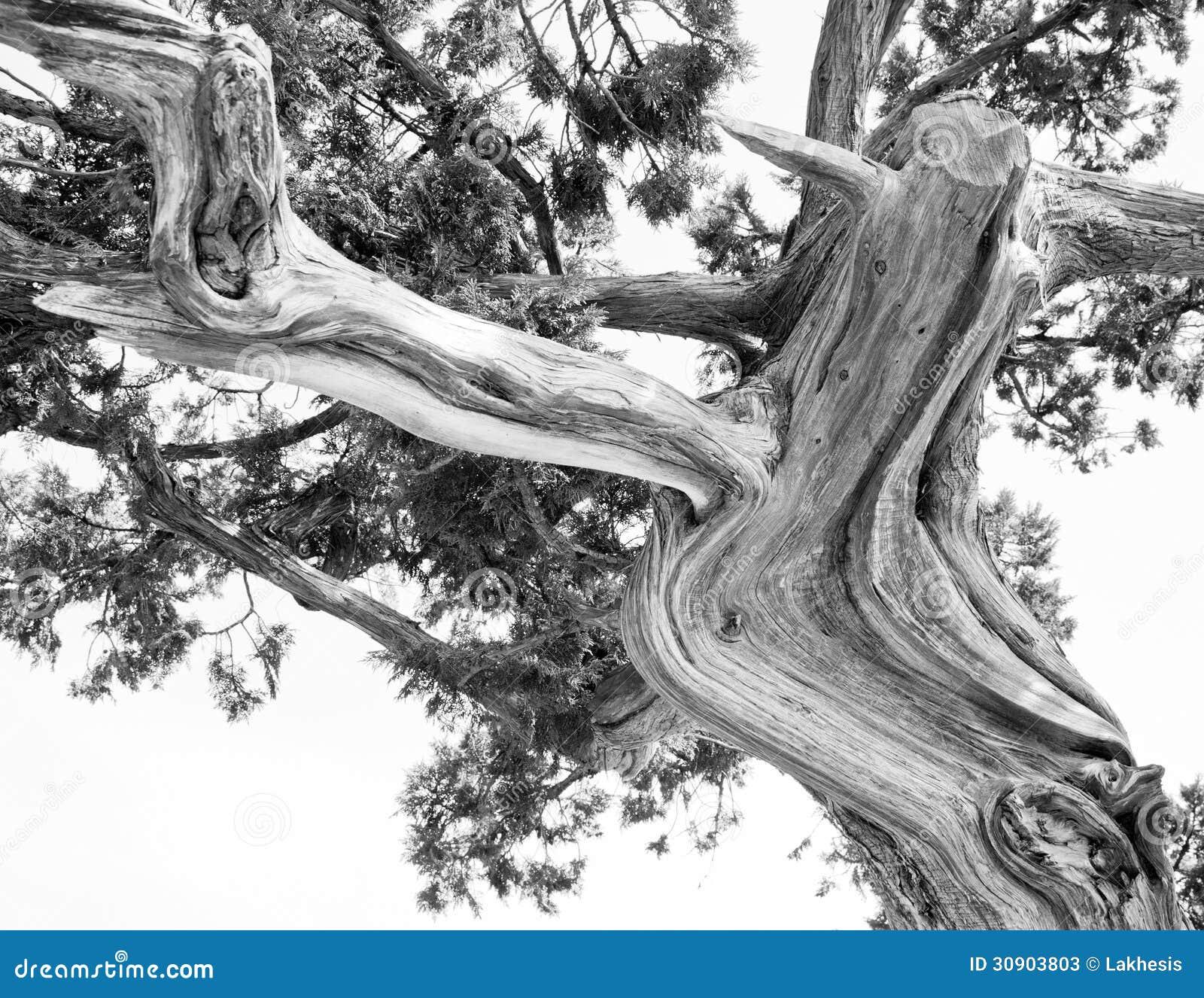 About Pine Tree Silhouette On Pinterest Pine Tree Tattoo Pine Tree