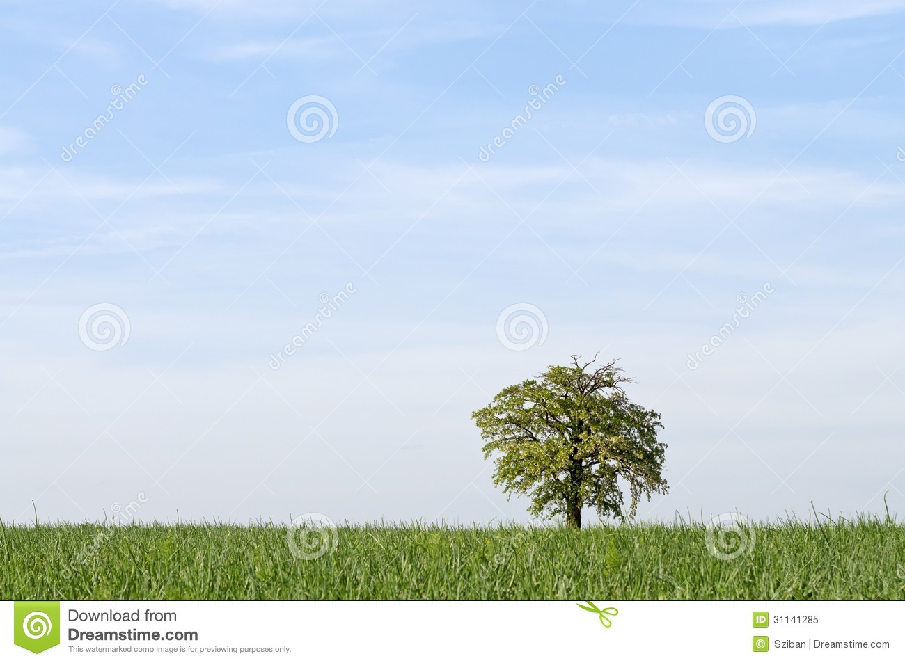 Tree alone with large sky horizontal royalty free stock for Nice small trees