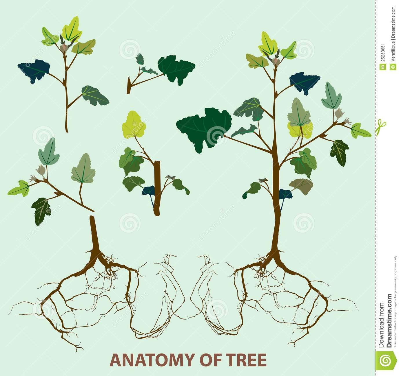 Tree anatomy top to root stock illustration. Illustration of jungle ...