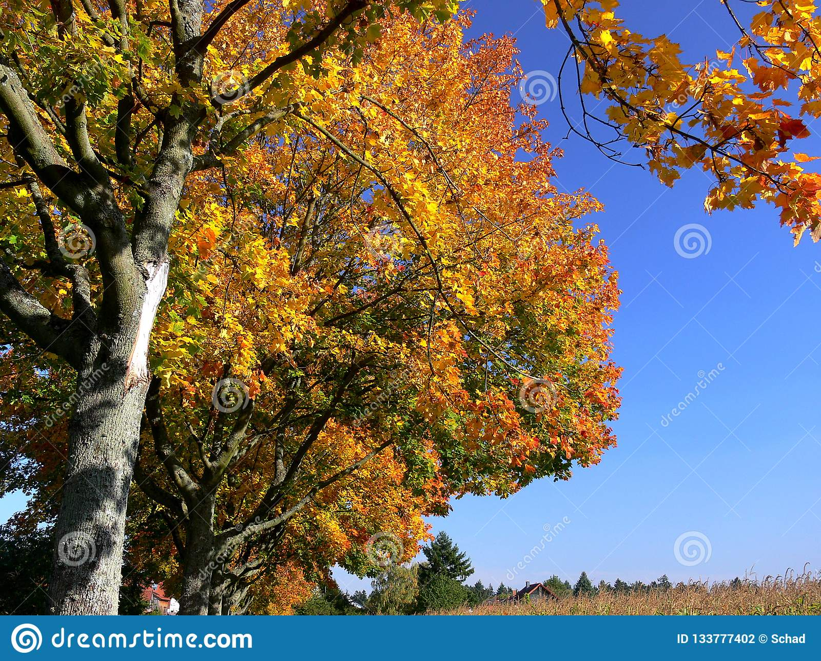 Avenue with trees in great fall colors and blue sky