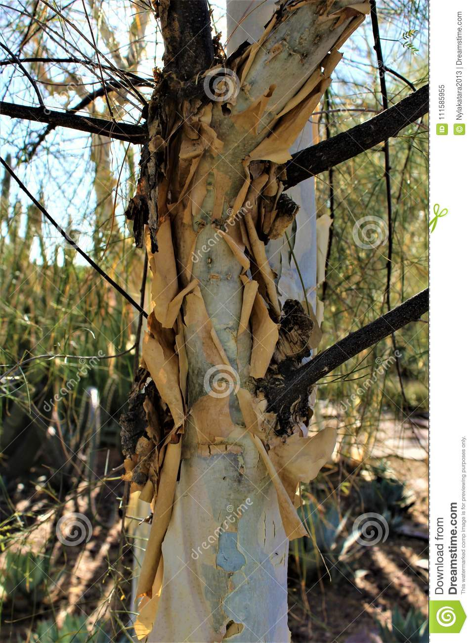 Desert Botanical Garden Phoenix Arizona Stock Image - Image of ...