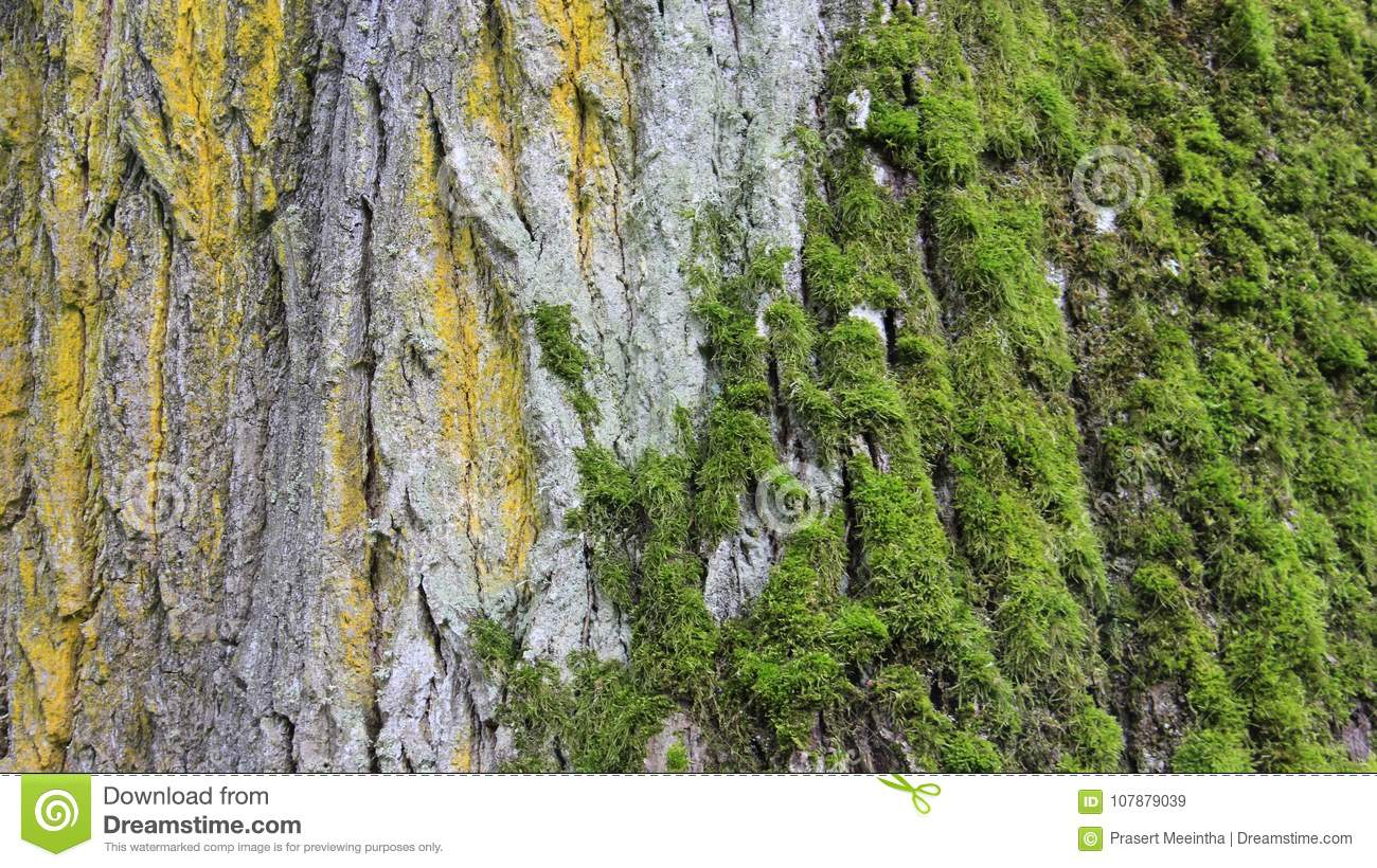 Tree Bark and Green moss stock image. Image of colorful - 107879039