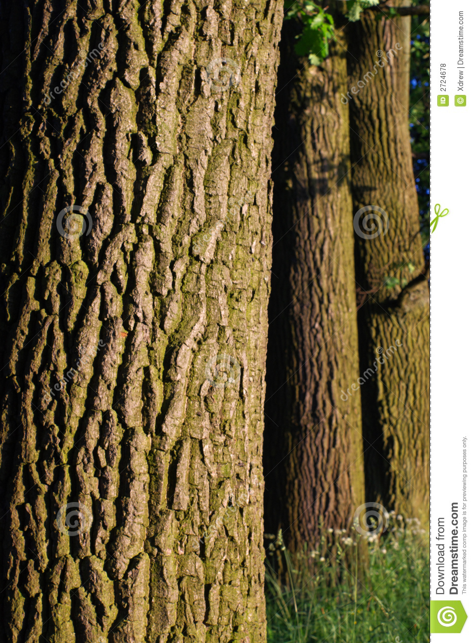 Tree Bark Pattern Stock Photo Image Of Brown Textured