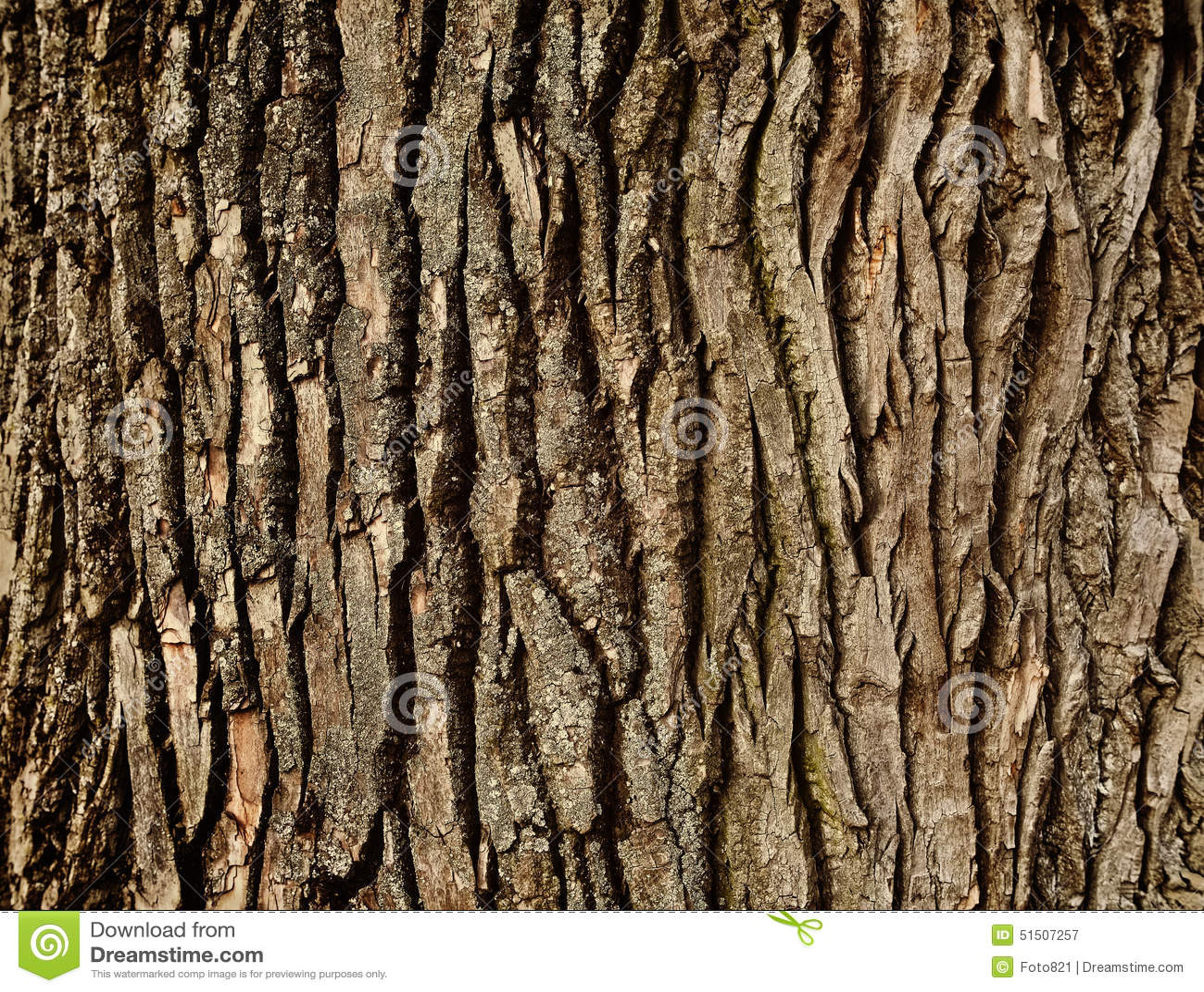 Tree Bark Stock Photo Image 51507257