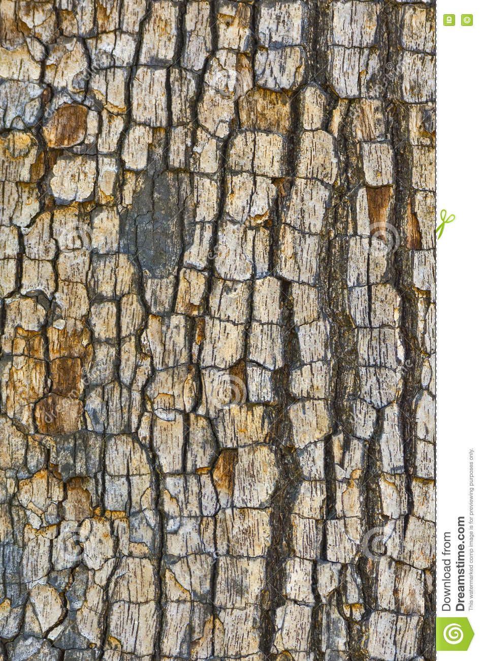 Download Tree bark texture stock photo. Image of tree, painted - 72982306