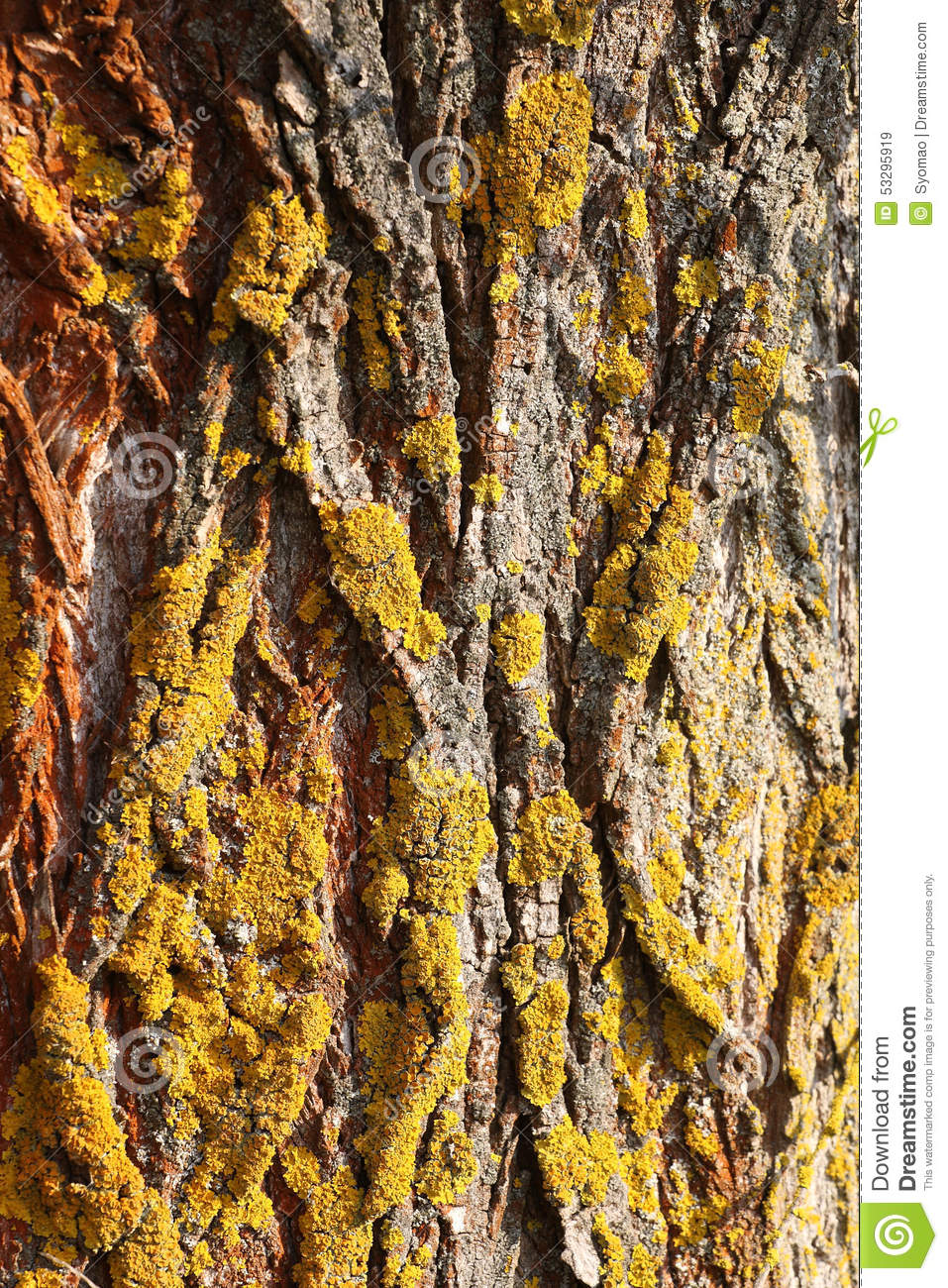 Tree Bark Texture With Moss Stock Photo Image 53295919