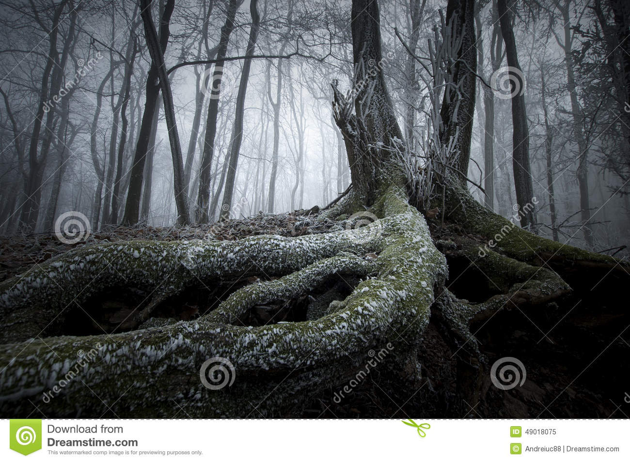 mysterious forest in winter - photo #11