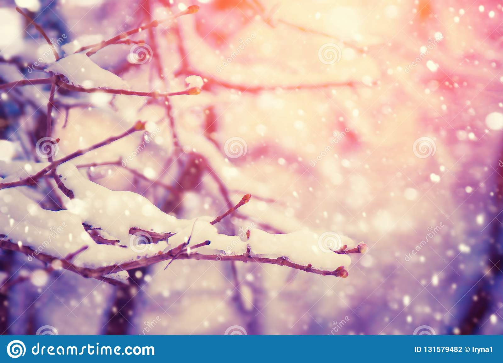 Tree branch covered with snow. Winter nature background with sunshine