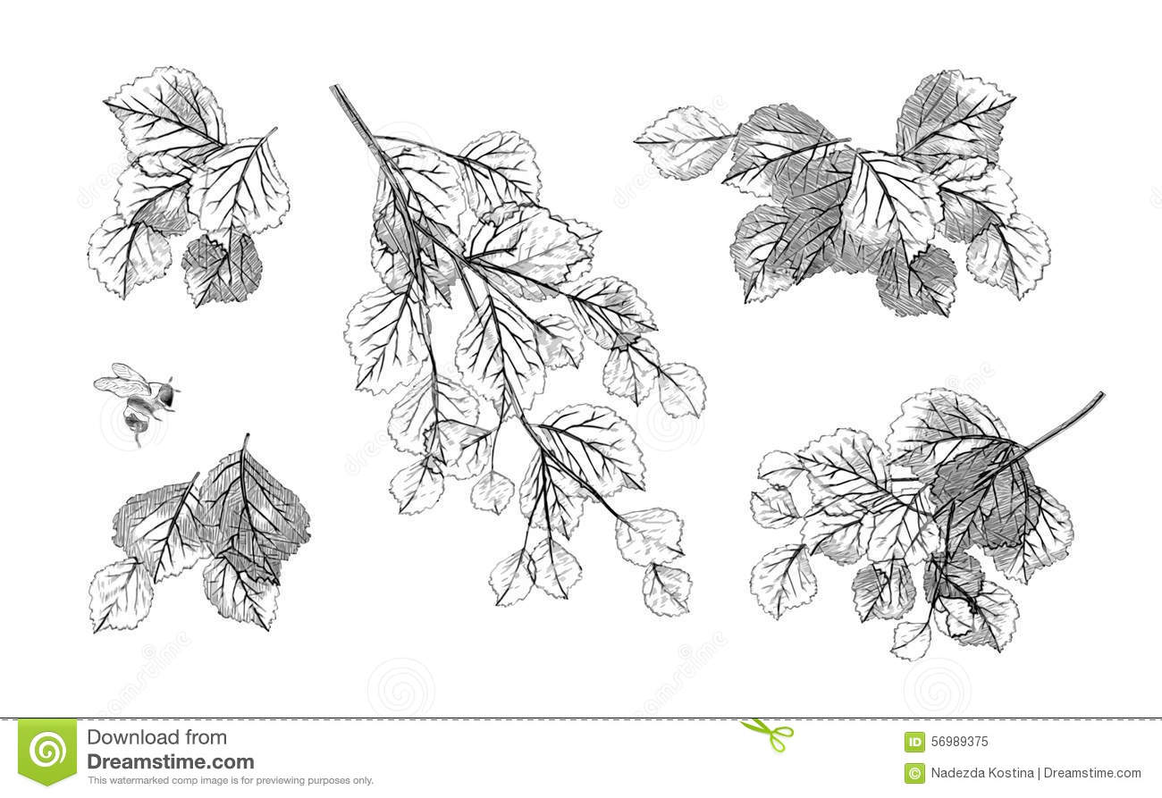 how to draw tree leaves digital