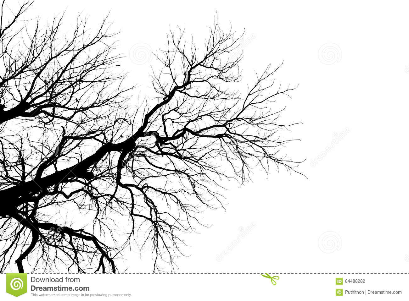 tree branch silhouette without leaves stock photo image