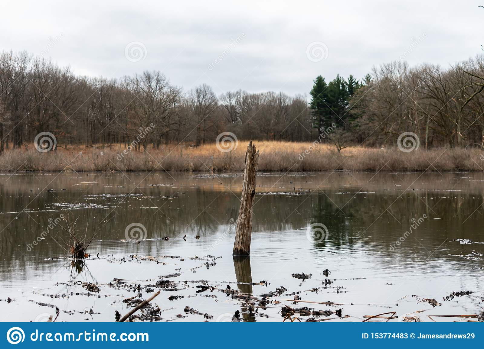 Tree Branch Sticking out of a Pond in a Forest during Winter in Suburban Willow Springs Illinois