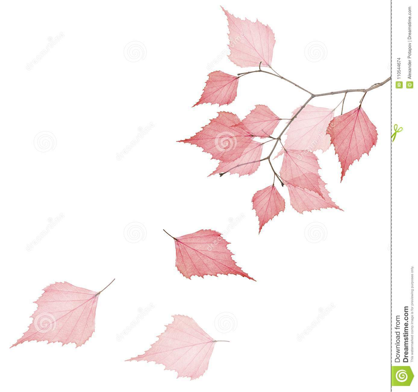 Tree Branch With Three Falling Red Dried Leaves Stock Photo Image