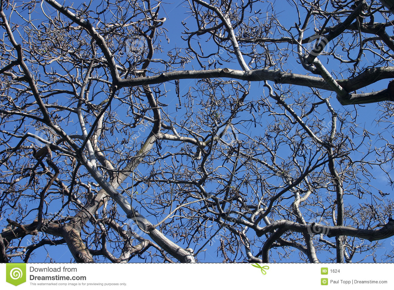 Tree Branches against Blue Background