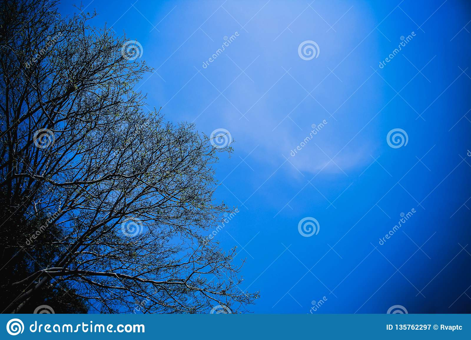Tree Branches And Clear Blue Sky