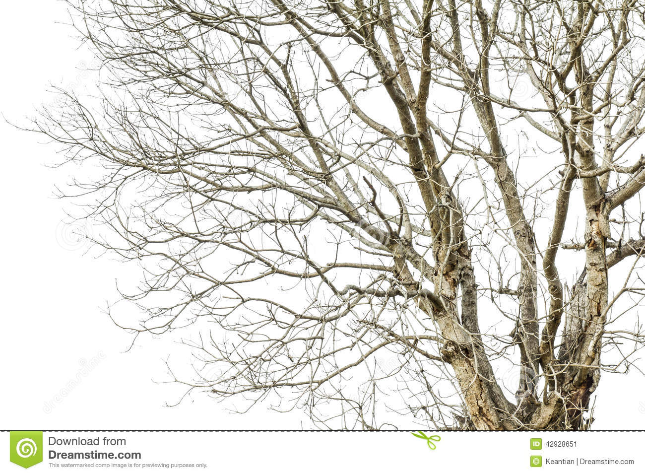 Tree Branches Drought Stock Photo - Image: 42928651