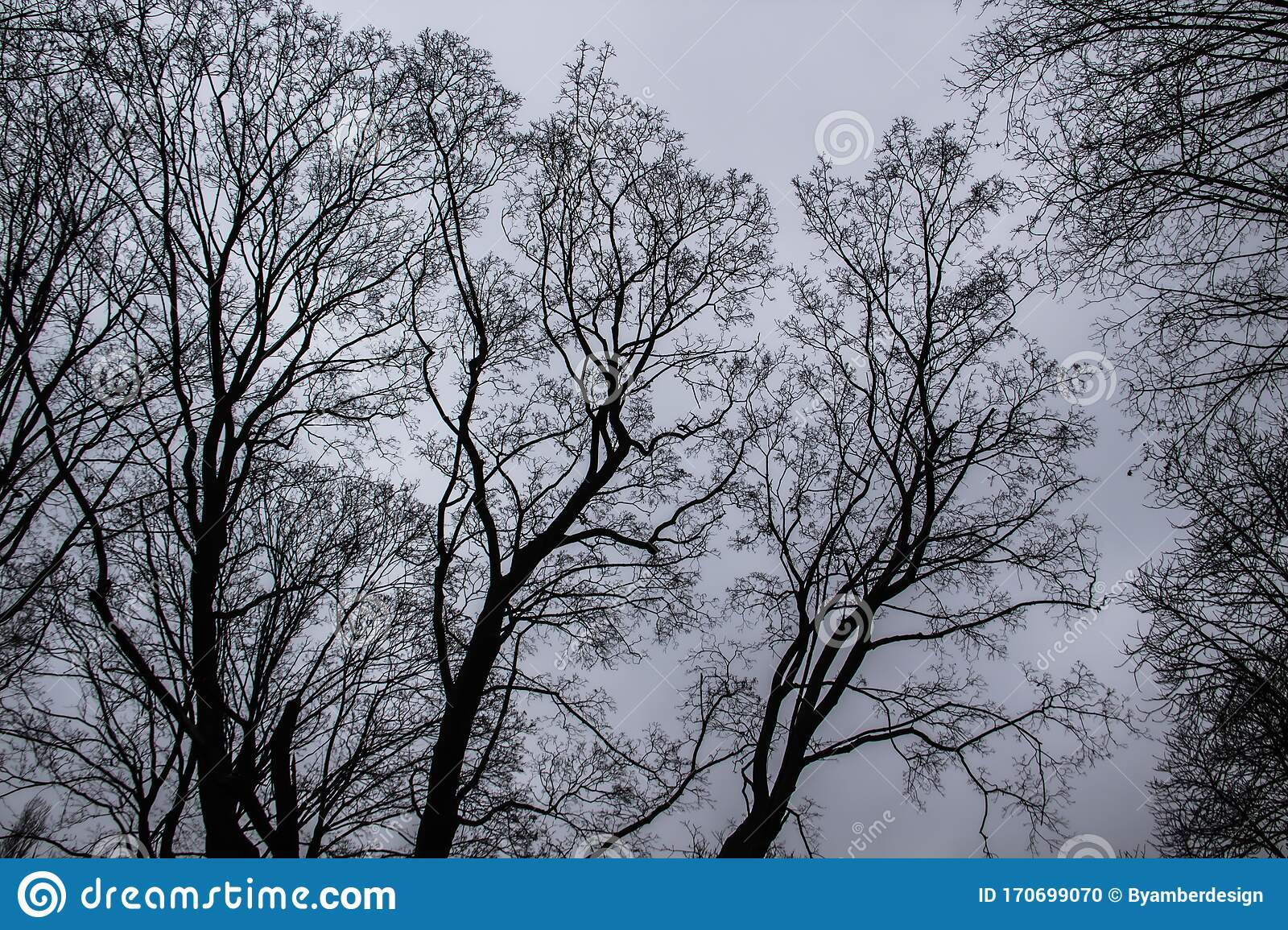 A Tree Branches On The Grey Sky. A Mainly Gloomy Cloudy