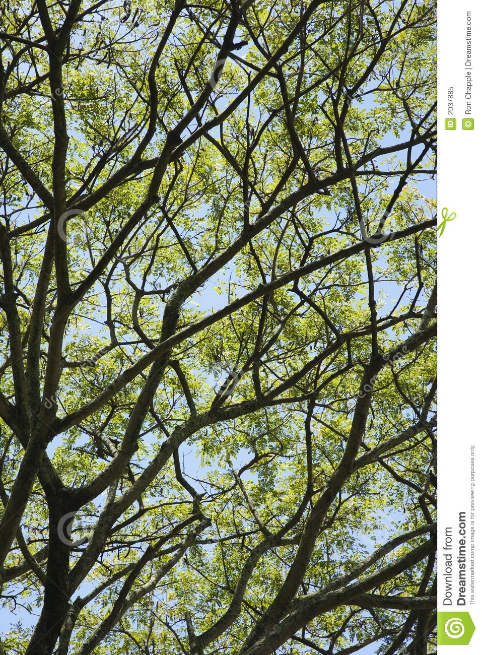 Tree Branches With Leaves And Sky. Royalty Free Stock ...