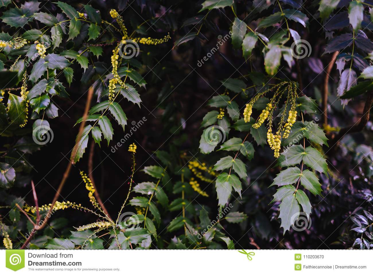 Tree Branches With Small Yellow Flowers Stock Photo Image Of