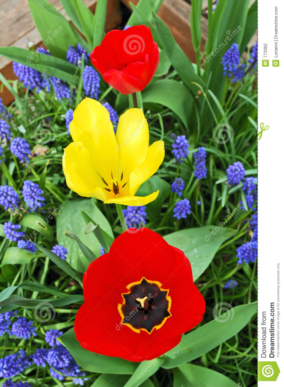 Tree bright tulips red and yellow between blue small flowers i download comp mightylinksfo
