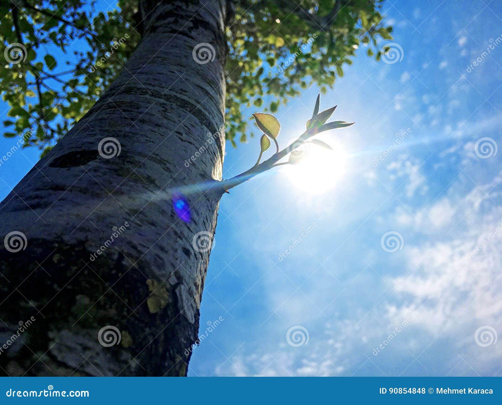 Tree and Bud