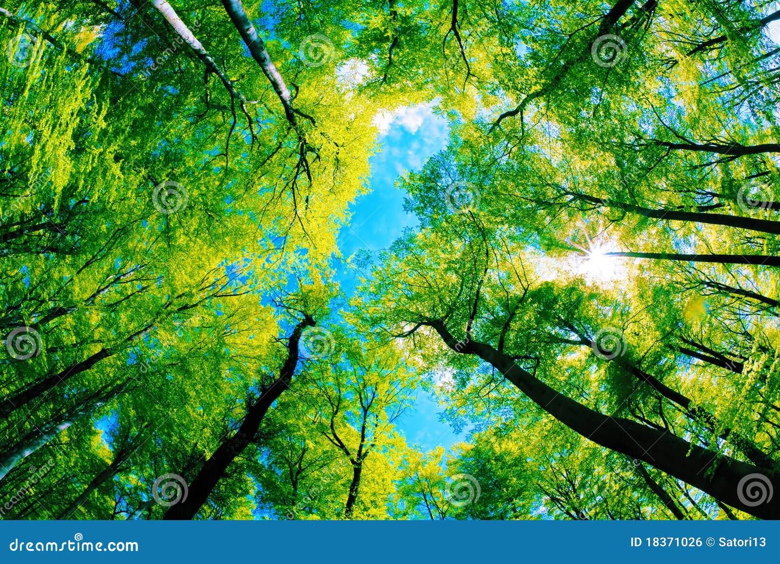 Tree Canopy Royalty Free Stock Image Image 18371026