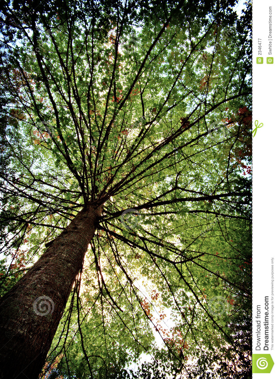 Tree canopy royalty free stock photography image 2346477 for Canopy of trees