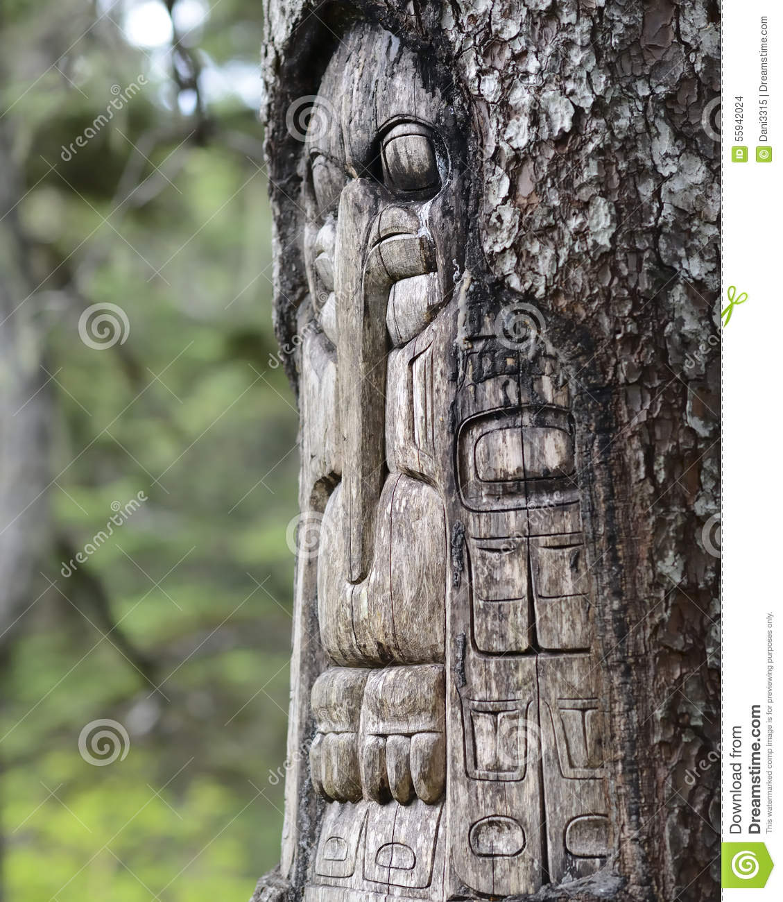 Tree carved by native Tlingit indians