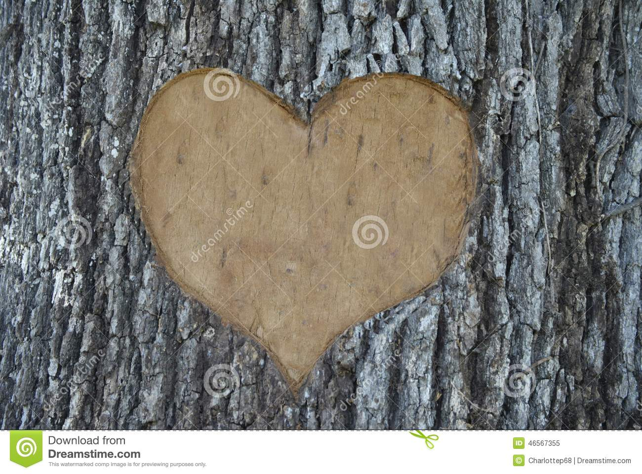 Tree carving stock image of scarred marriage