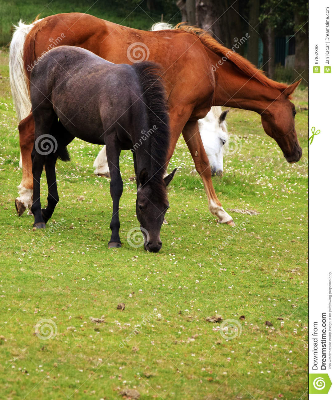 tree colors of horses stock photo image of place atmosphere 97852868