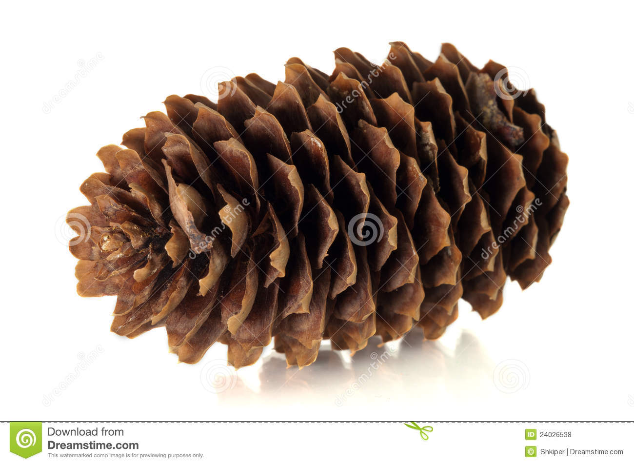Tree cone stock photo image of orange tree disclosed for Large christmas pine cones