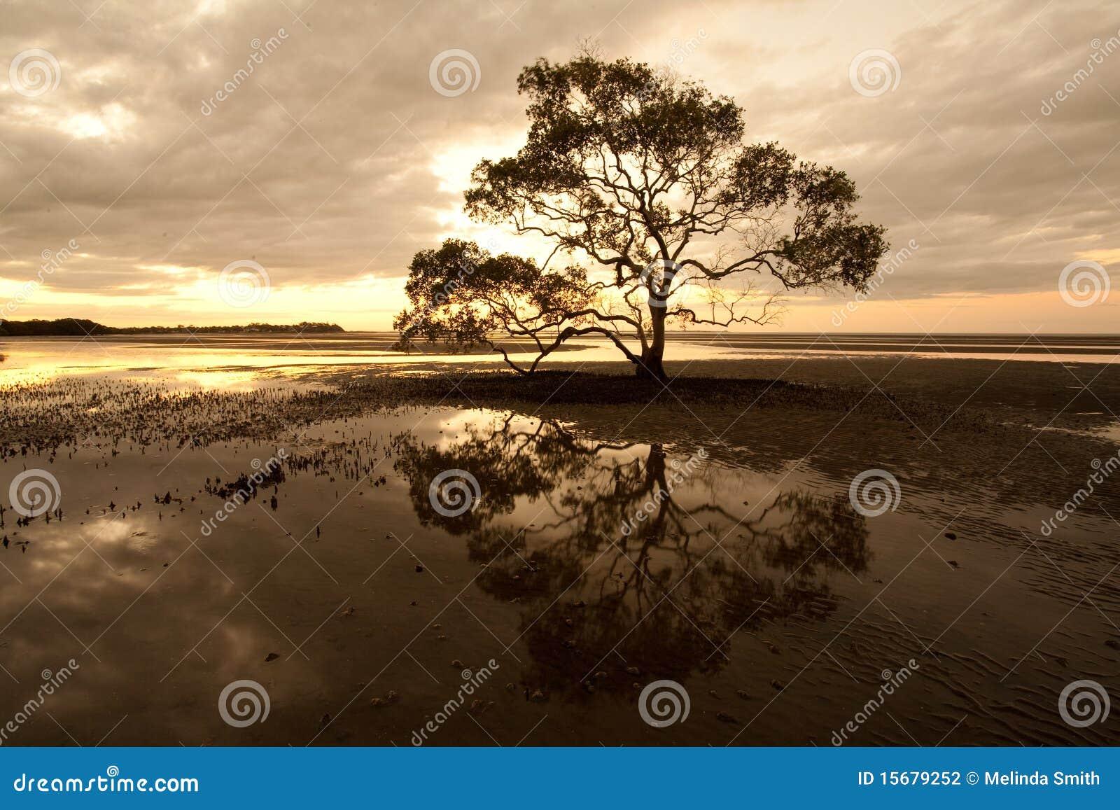 Tree of Desolation