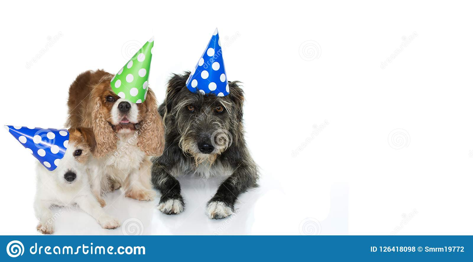 TREE DOGS CELEBRATING A BIRTHDAY PARTY WEARING A BLUE, GREEN AND