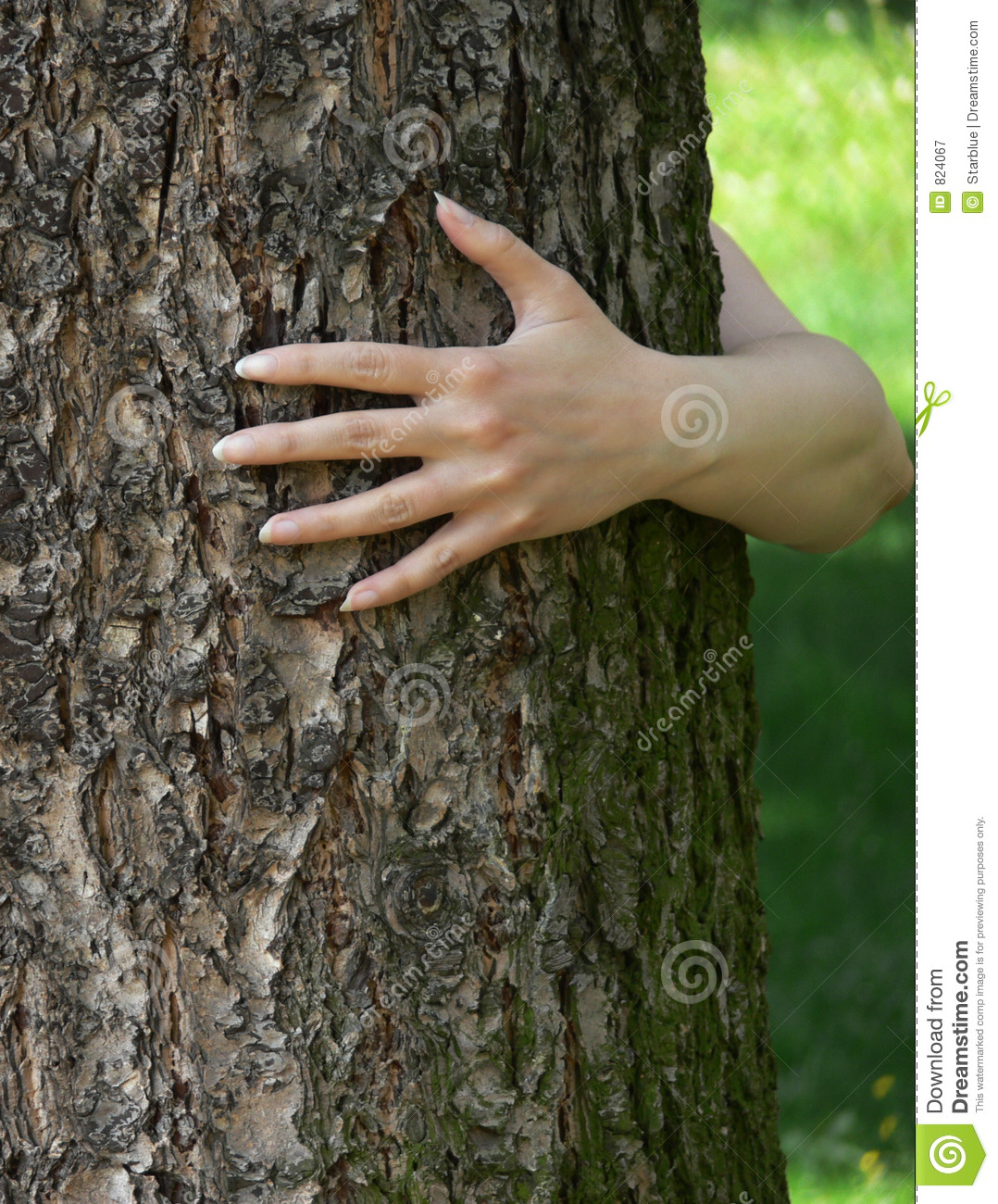 Tree and ecology