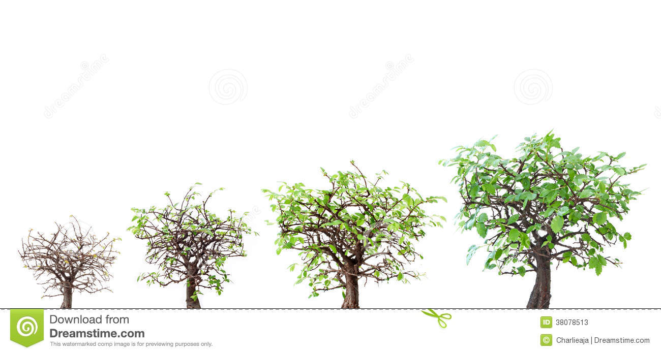 Evolution of a tree at various stages of growth.