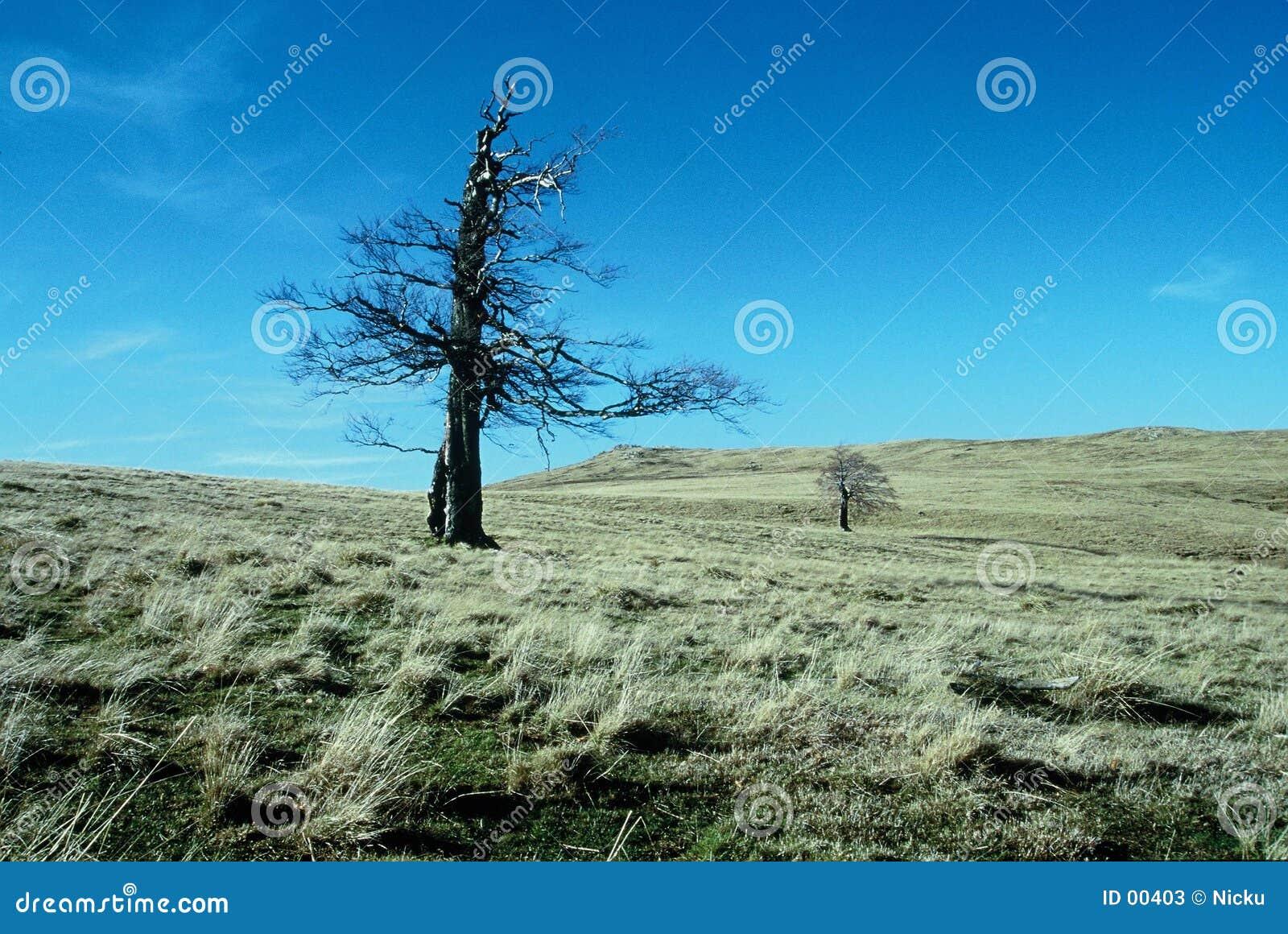 Tree för fältbergremote