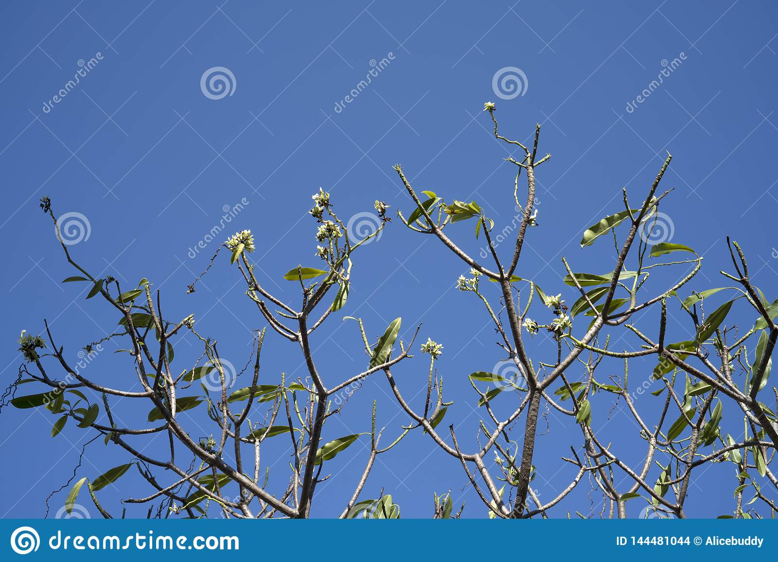 Tree and white flower in spring