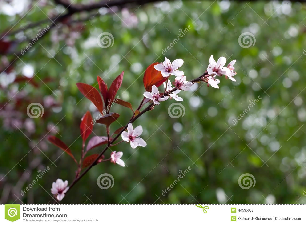 Tree Flowers Stock Photo Image Of Small Background 44535658
