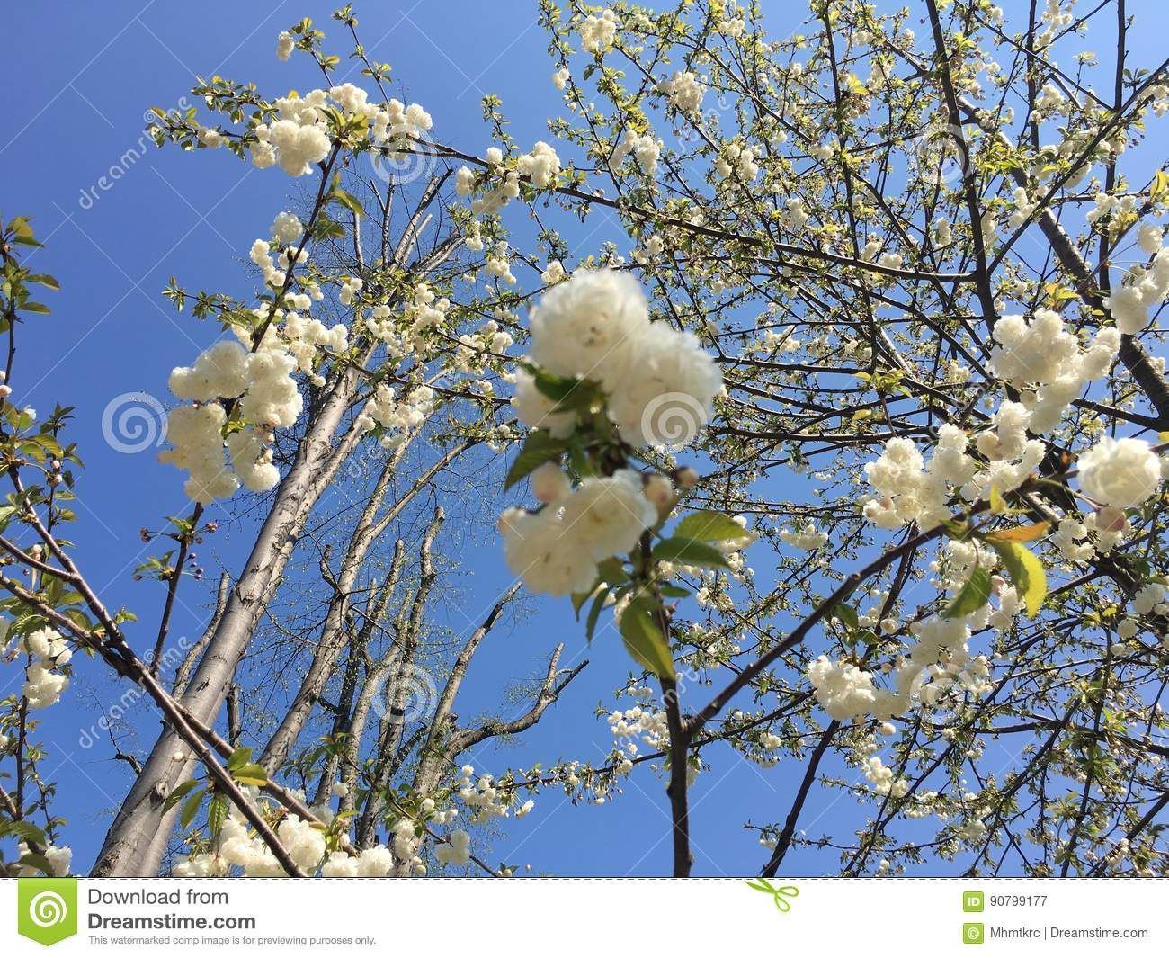 Tree and Flowers