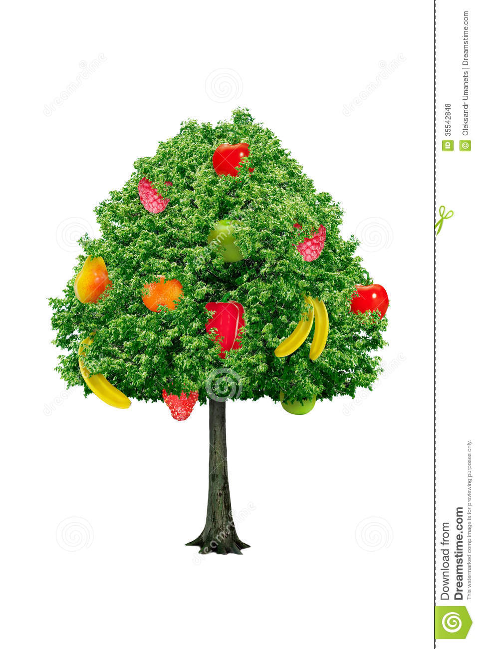 Tree With Fruits Isolated On A White Background Stock ...