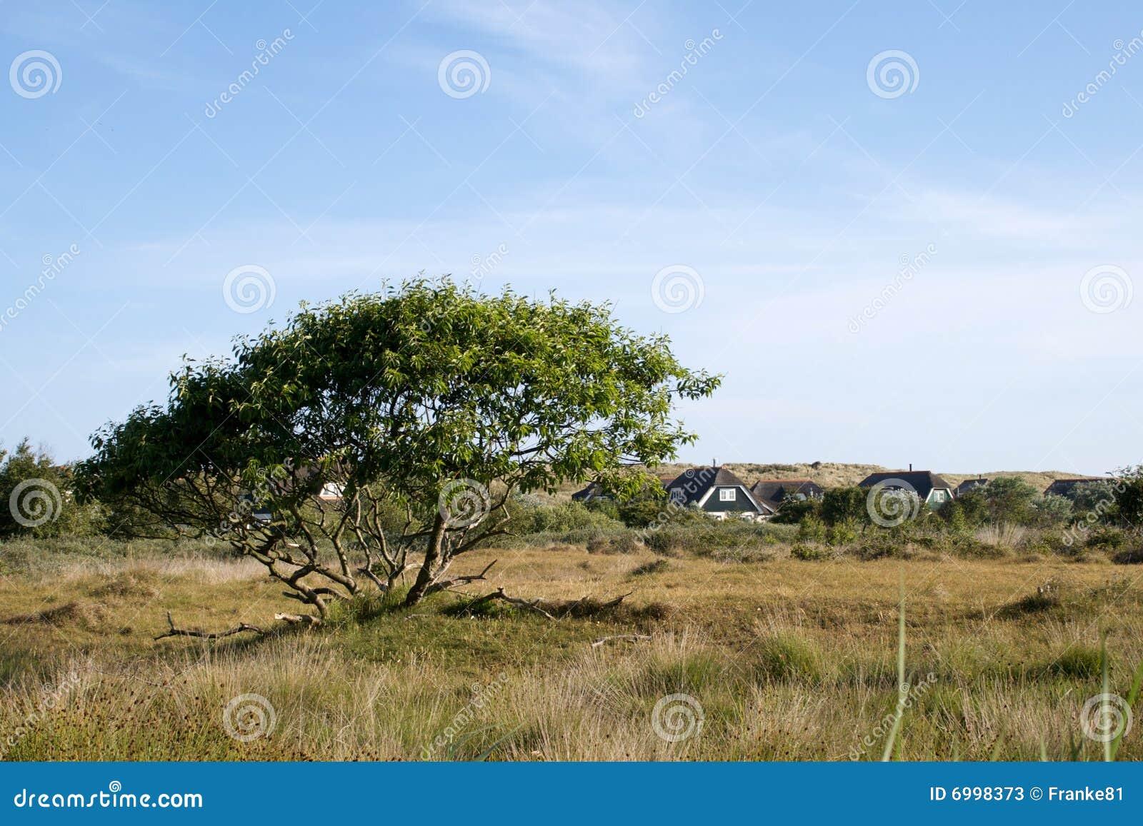 Tree on the grassland